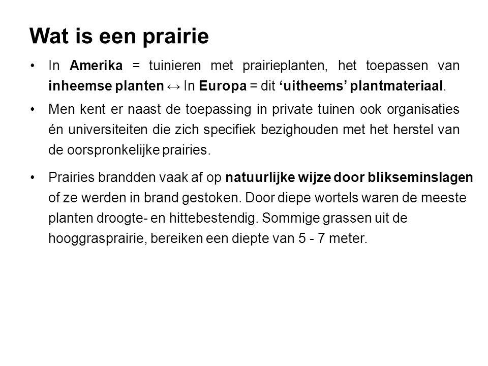 Wat is een prairie Vele prairieplanten die oorspronkelijk uit N-Amerika komen zijn echter al vele jaren in gebruik in Europa.