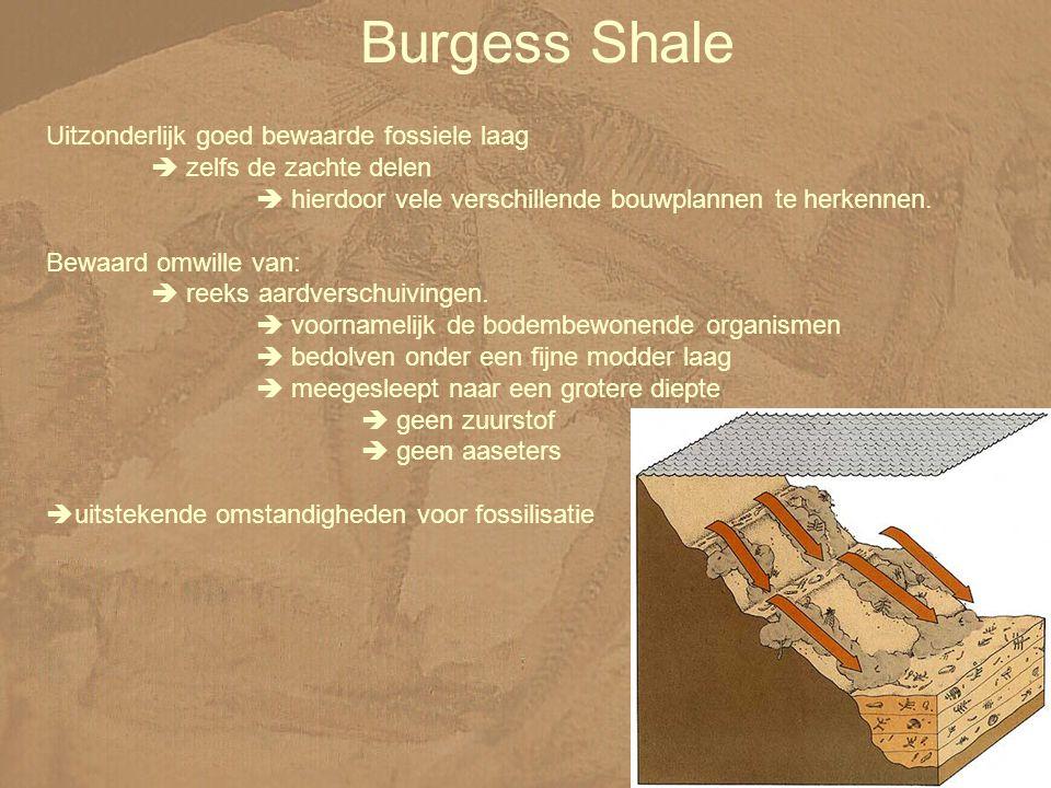 Burgess Shale Uitzonderlijk goed bewaarde fossiele laag  zelfs de zachte delen  hierdoor vele verschillende bouwplannen te herkennen.