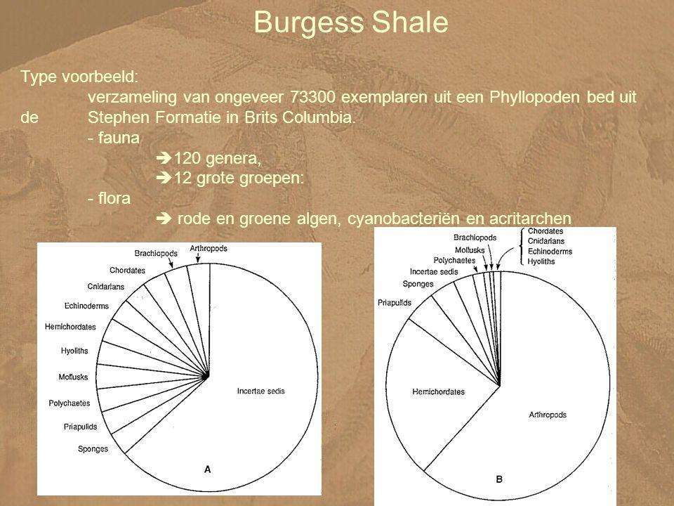 Burgess Shale Type voorbeeld: verzameling van ongeveer 73300 exemplaren uit een Phyllopoden bed uit de Stephen Formatie in Brits Columbia.