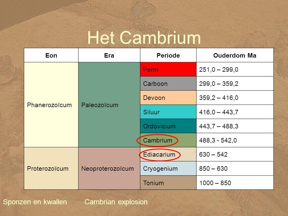 Het Cambrium Sponzen en kwallen EonEraPeriodeOuderdom Ma PhanerozoïcumPaleozoïcum Perm251,0 – 299,0 Carboon299,0 – 359,2 Devoon359,2 – 416,0 Siluur416,0 – 443,7 Ordovicium443,7 – 488,3 Cambrium488,3 - 542,0 ProterozoïcumNeoproterozoïcum Ediacarium630 – 542 Cryogenium850 – 630 Tonium1000 – 850 Cambrian explosion