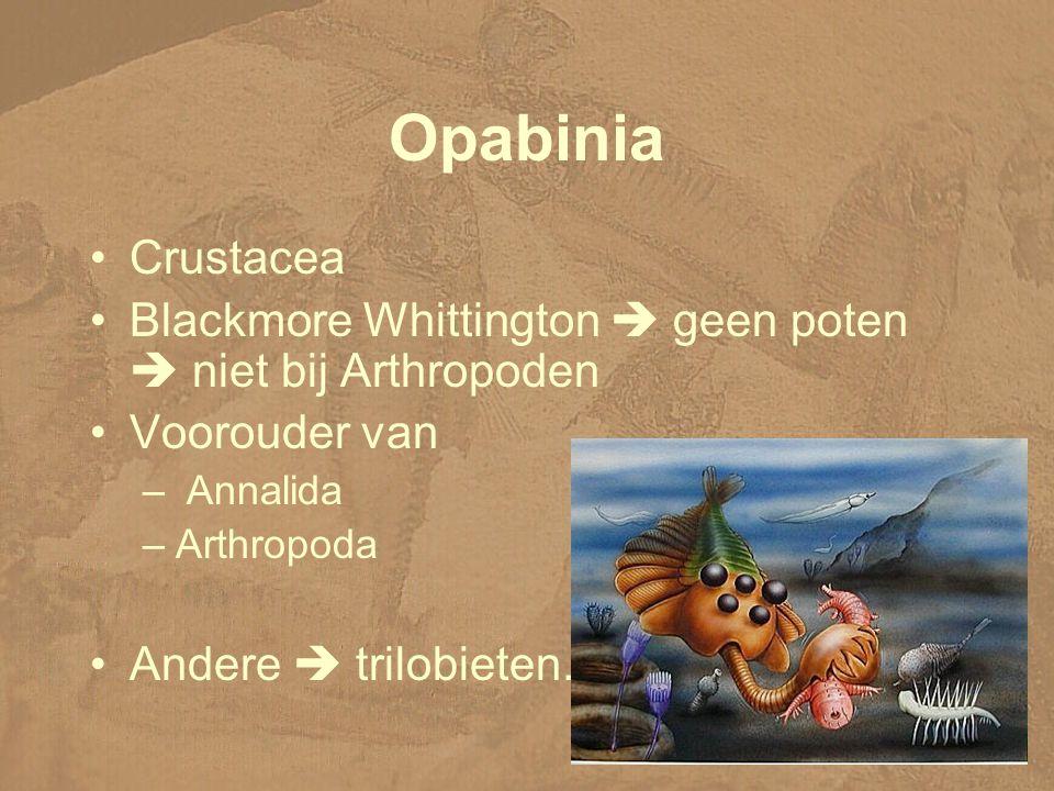 Opabinia Crustacea Blackmore Whittington  geen poten  niet bij Arthropoden Voorouder van – Annalida –Arthropoda Andere  trilobieten.