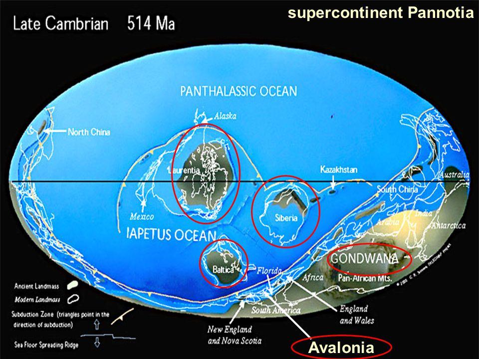 Avalonia supercontinent Pannotia
