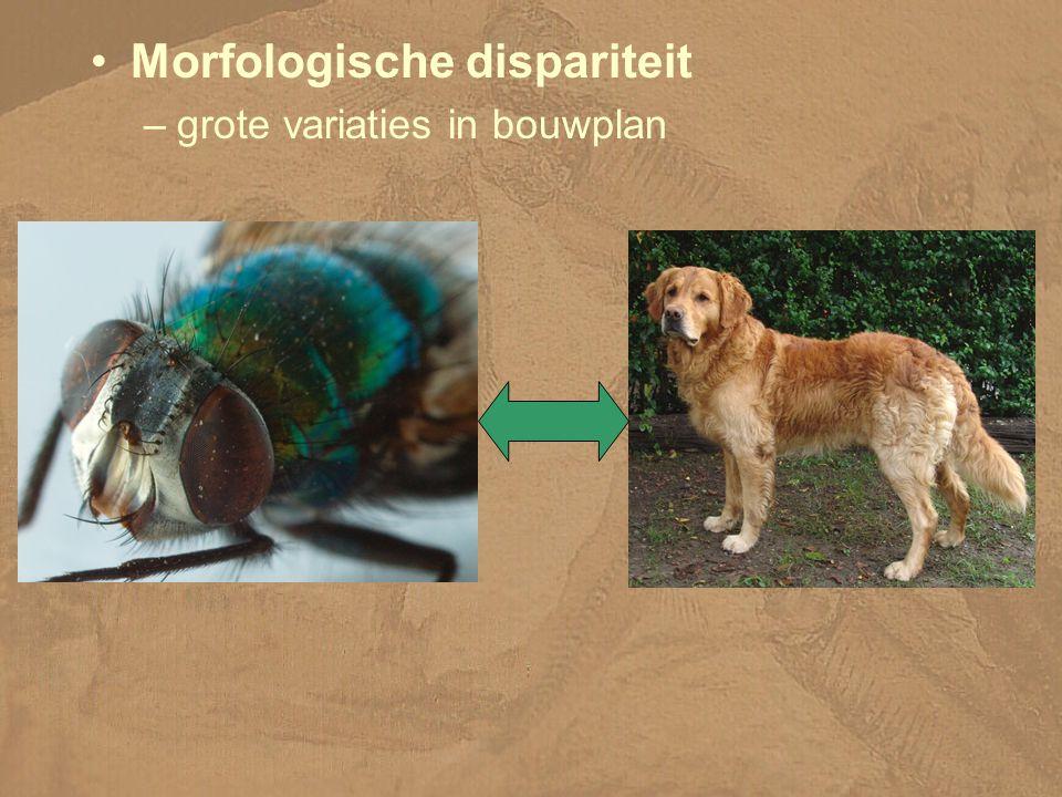 Morfologische dispariteit –grote variaties in bouwplan