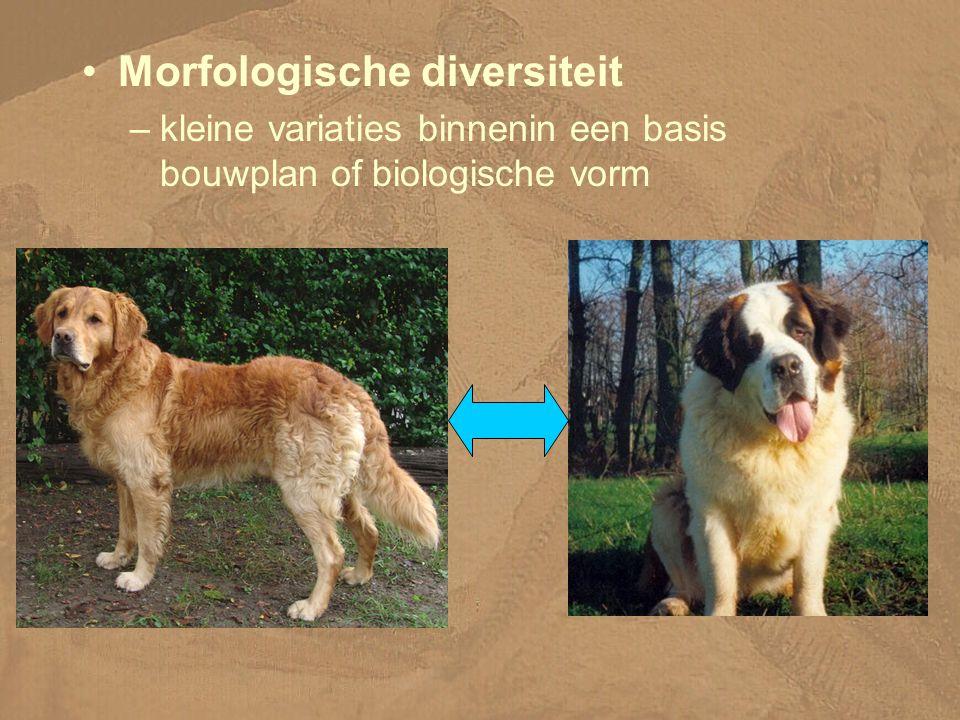 Morfologische diversiteit –kleine variaties binnenin een basis bouwplan of biologische vorm
