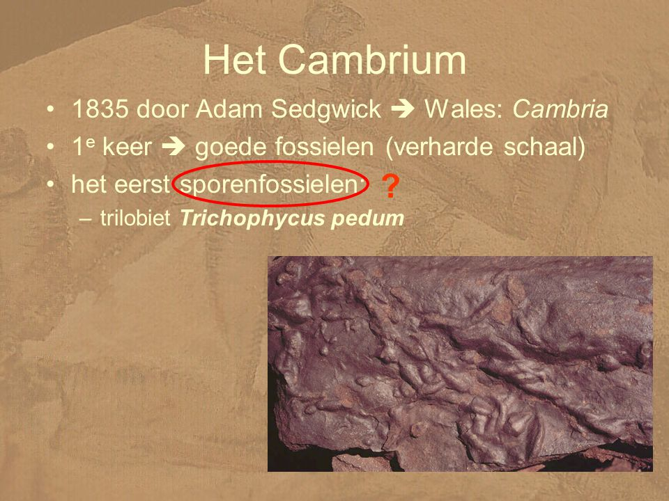 Het Cambrium 1835 door Adam Sedgwick  Wales: Cambria 1 e keer  goede fossielen (verharde schaal) het eerst sporenfossielen: –trilobiet Trichophycus pedum ?