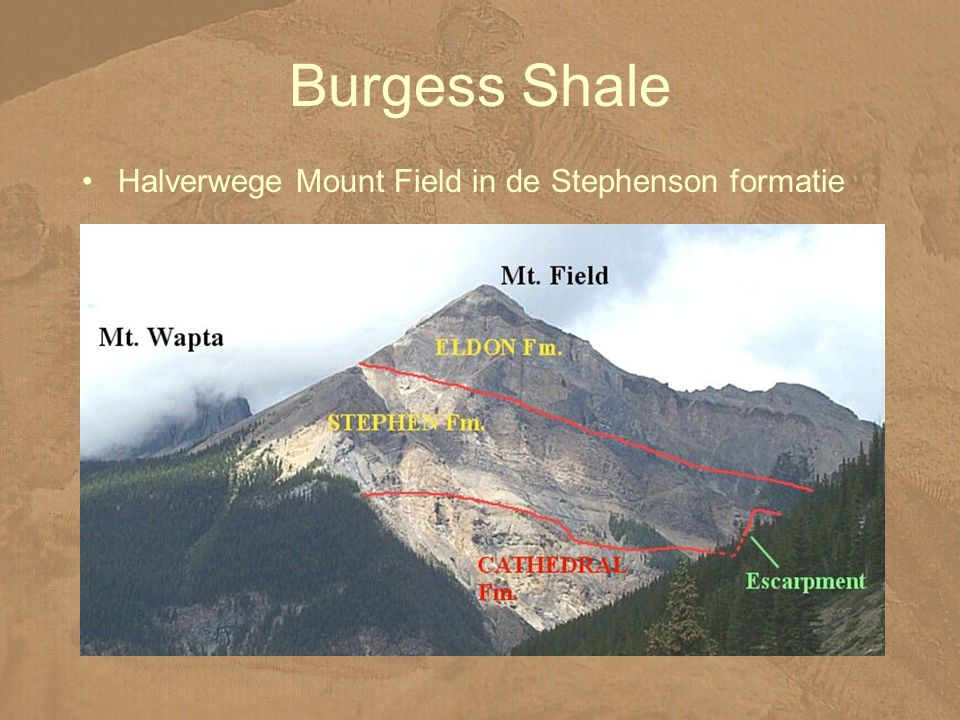 Burgess Shale Halverwege Mount Field in de Stephenson formatie