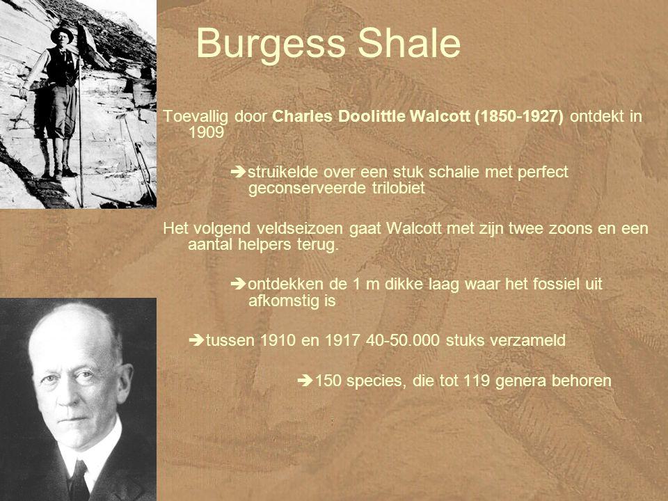Burgess Shale Toevallig door Charles Doolittle Walcott (1850-1927) ontdekt in 1909  struikelde over een stuk schalie met perfect geconserveerde trilobiet Het volgend veldseizoen gaat Walcott met zijn twee zoons en een aantal helpers terug.