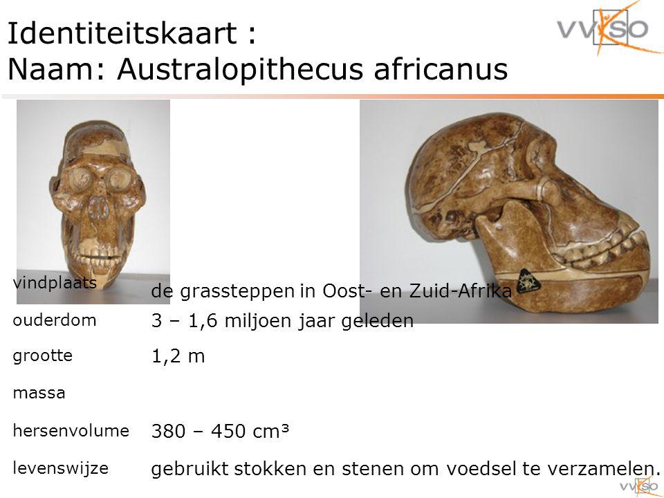 Identiteitskaart : Naam: Australopithecus africanus vindplaats de grassteppen in Oost- en Zuid-Afrika ouderdom 3 – 1,6 miljoen jaar geleden grootte 1,2 m massa hersenvolume 380 – 450 cm³ levenswijze gebruikt stokken en stenen om voedsel te verzamelen.