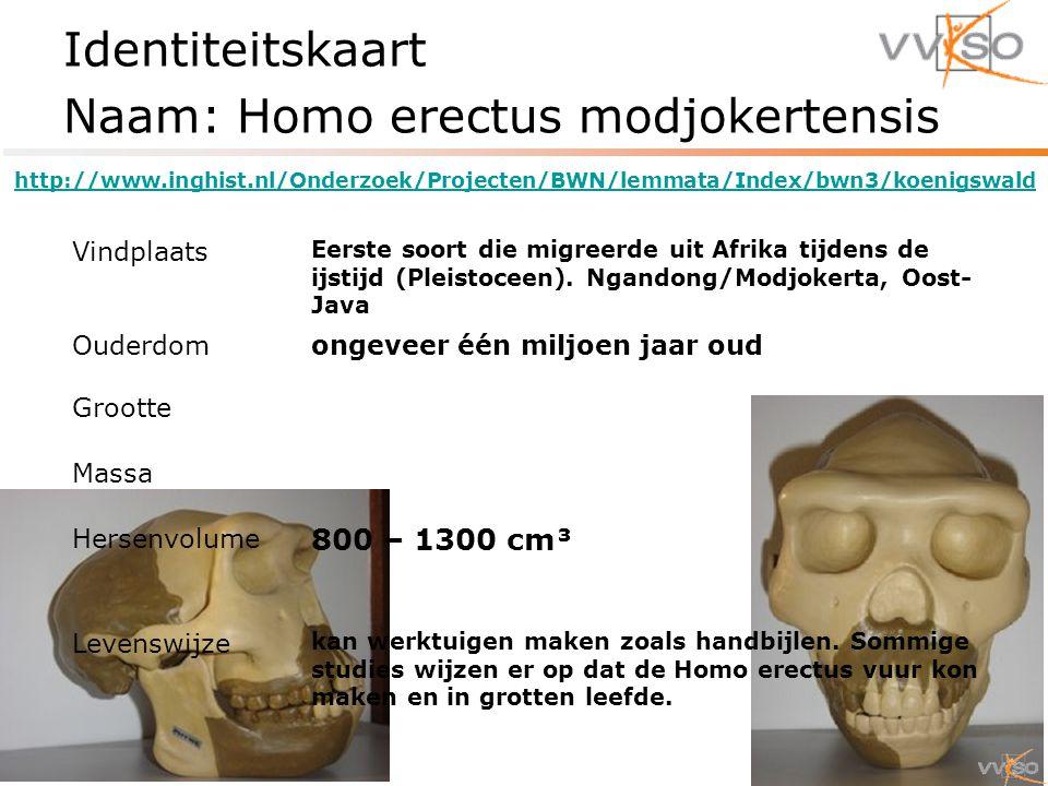 Identiteitskaart Naam: Homo erectus modjokertensis Vindplaats Eerste soort die migreerde uit Afrika tijdens de ijstijd (Pleistoceen).