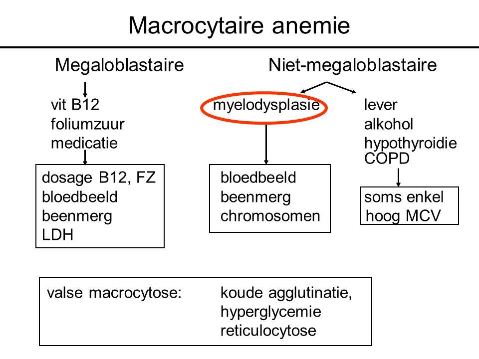 Macrocytaire anemie MegaloblastaireNiet-megaloblastaire vit B12 myelodysplasielever foliumzuuralkohol medicatiehypothyroidie COPD dosage B12, FZ bloedbeeld bloedbeeld beenmerg soms enkel beenmerg chromosomen hoog MCV LDH valse macrocytose: koude agglutinatie, hyperglycemie reticulocytose