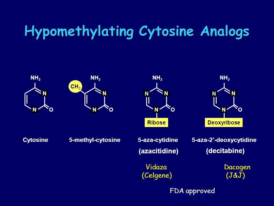 Hypomethylating Cytosine Analogs Hypomethylating Cytosine Analogs N O NH 2 N N O N CH 3 N O NH 2 N N Ribose N O NH 2 N N Deoxyribose 5-aza-cytidine5-aza-2'-deoxycytidine5-methyl-cytosineCytosine (azacitidine) (decitabine) Vidaza Dacogen (Celgene) (J&J) FDA approved