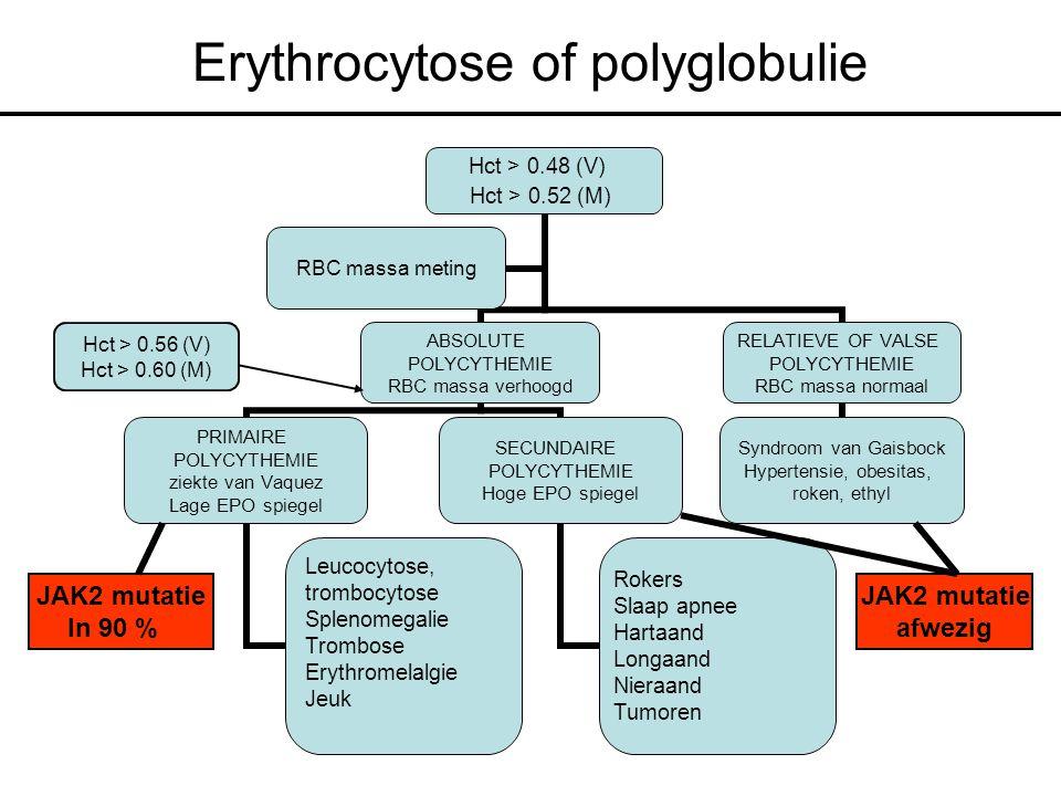Erythrocytose of polyglobulie Hct > 0.48 (V) Hct > 0.52 (M) ABSOLUTE POLYCYTHEMIE RBC massa verhoogd PRIMAIRE POLYCYTHEMIE ziekte van Vaquez Lage EPO spiegel Leucocytose, trombocytose Splenomegalie Trombose Erythromelalgie Jeuk SECUNDAIRE POLYCYTHEMIE Hoge EPO spiegel Rokers Slaap apnee Hartaand Longaand Nieraand Tumoren RELATIEVE OF VALSE POLYCYTHEMIE RBC massa normaal Syndroom van Gaisbock Hypertensie, obesitas, roken, ethyl RBC massa meting Hct > 0.56 (V) Hct > 0.60 (M) JAK2 mutatie In 90 % JAK2 mutatie afwezig