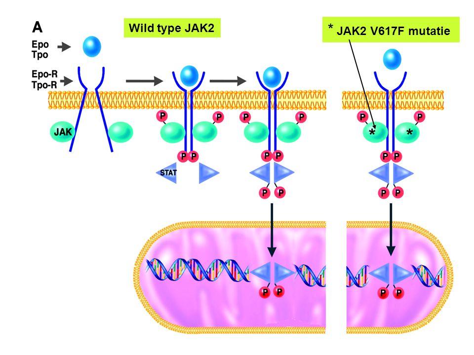 * JAK2 V617F mutatie Wild type JAK2 *
