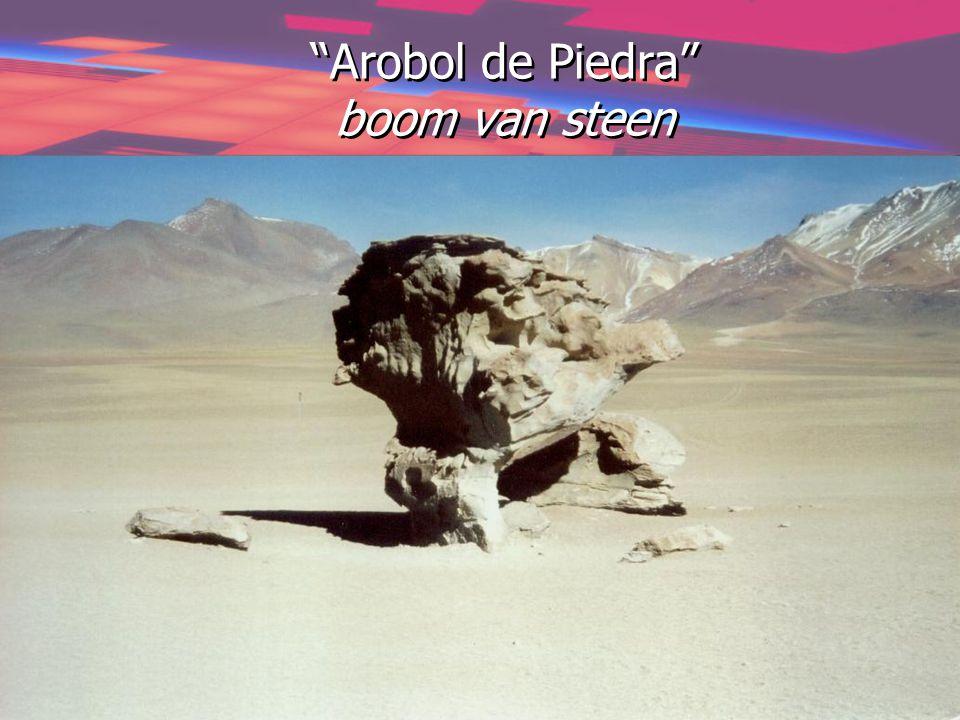 """""""Arobol de Piedra"""" boom van steen"""