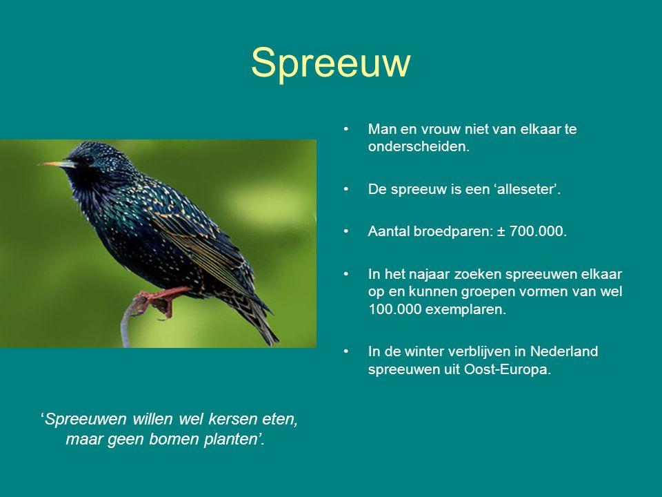 Wilde eend 'Een vreemde eend in de bijt'.In Nederland de meest voorkomende eendensoort.