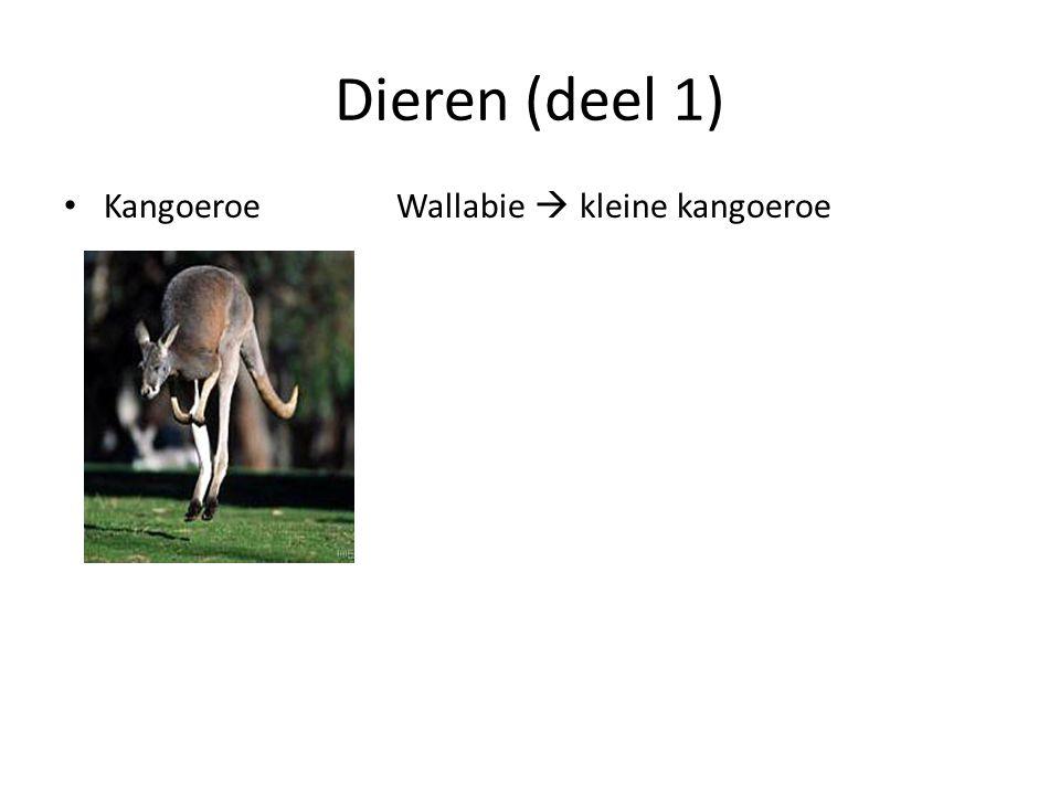 Dieren (deel 1) Kangoeroe Wallabie  kleine kangoeroe
