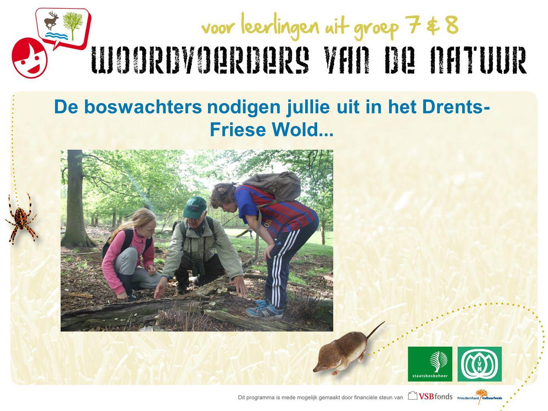 De boswachters nodigen jullie uit in het Drents- Friese Wold...