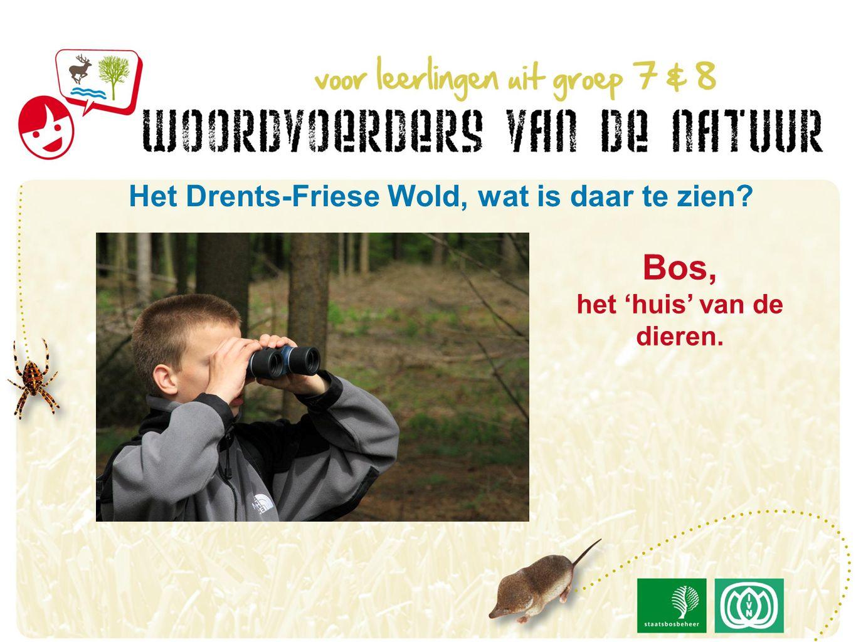 Het Drents-Friese Wold, wat is daar te zien Bos, het 'huis' van de dieren.