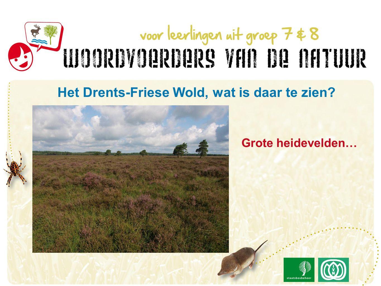 Grote heidevelden… Het Drents-Friese Wold, wat is daar te zien?