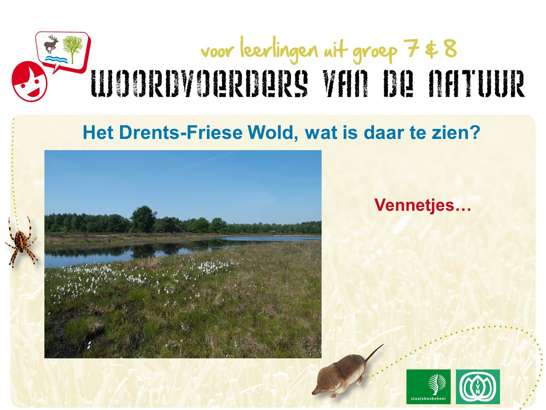 Vennetjes… Het Drents-Friese Wold, wat is daar te zien