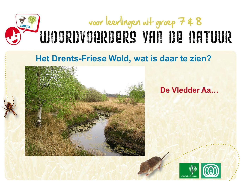 De Vledder Aa… Het Drents-Friese Wold, wat is daar te zien