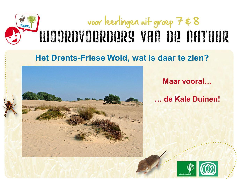 Maar vooral… … de Kale Duinen! Het Drents-Friese Wold, wat is daar te zien?