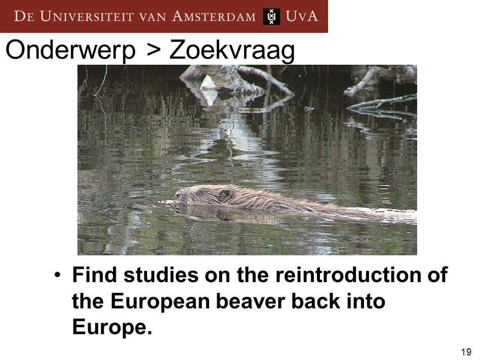 19 Onderwerp > Zoekvraag Find studies on the reintroduction of the European beaver back into Europe.