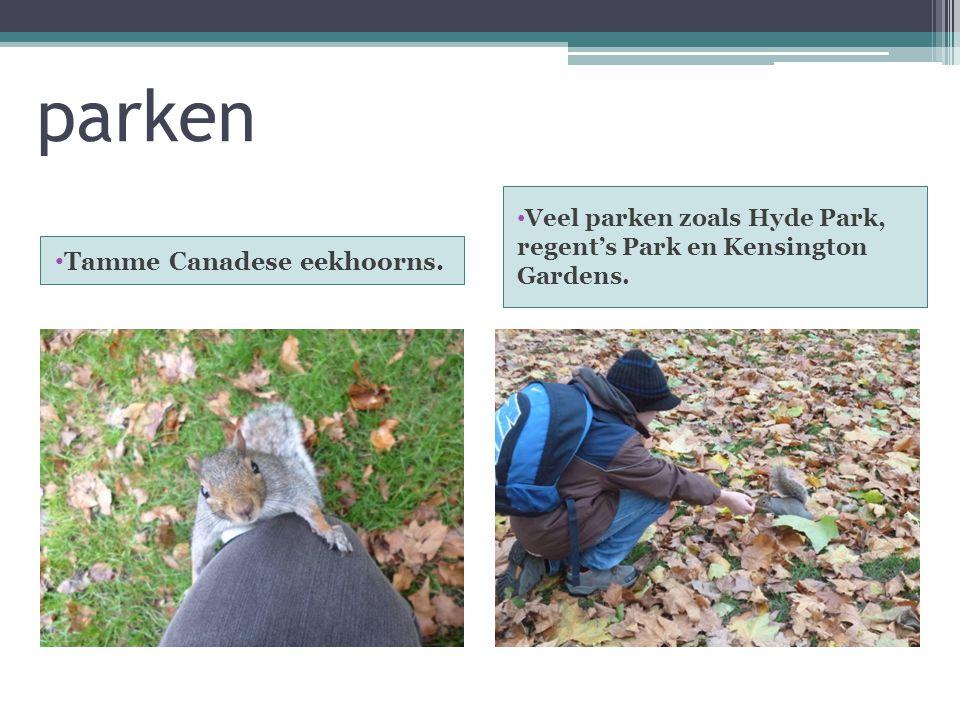 parken Tamme Canadese eekhoorns. Veel parken zoals Hyde Park, regent's Park en Kensington Gardens.
