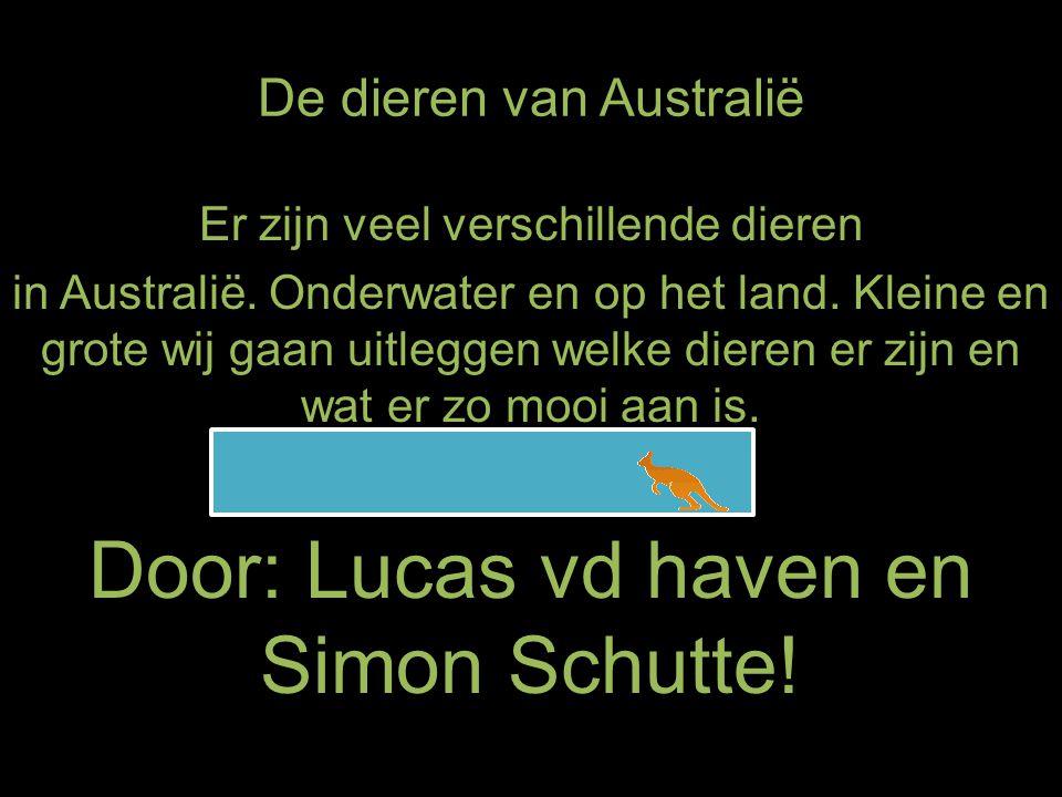 De dieren van Australië Er zijn veel verschillende dieren in Australië. Onderwater en op het land. Kleine en grote wij gaan uitleggen welke dieren er