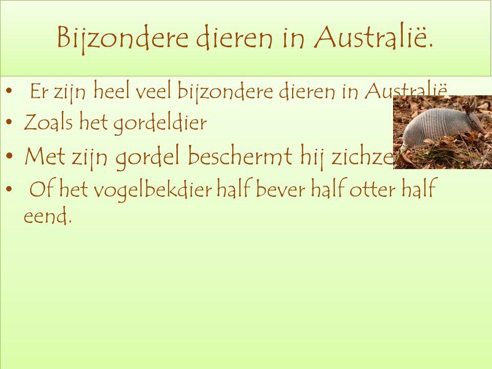 Bijzondere dieren in Australië. Er zijn heel veel bijzondere dieren in Australië Zoals het gordeldier Met zijn gordel beschermt hij zichzelf Of het vo