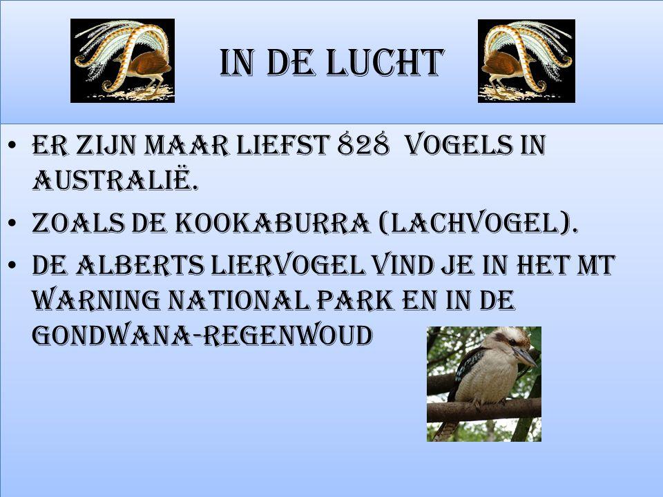 IN DE LUCHT Er zijn maar liefst 828 vogels in Australië. ZOALS DE KOOKABURRA (LACHVOGEL). De Alberts liervogel vind je in het Mt Warning National Park