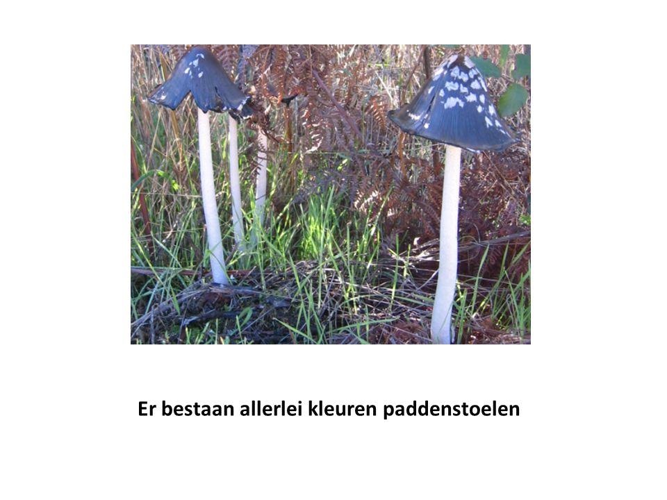 Er bestaan allerlei kleuren paddenstoelen