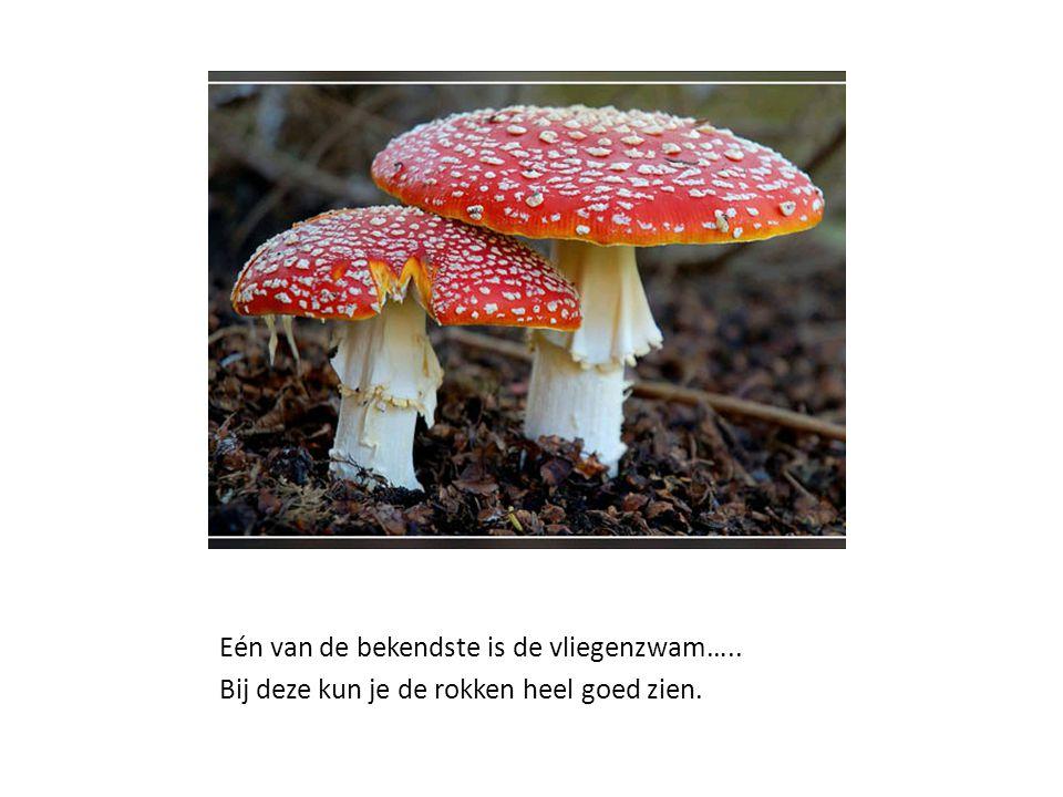 In het najaar lijkt het bos of park soms ineens vol te staan met paddenstoelen.