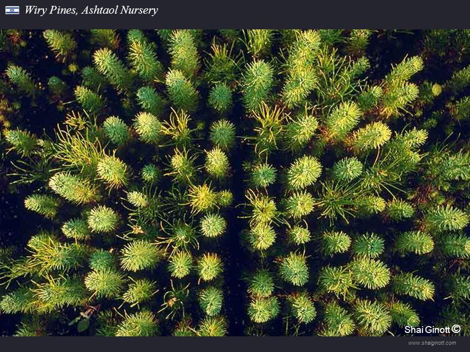 www.shaiginott.com Grazing in Lahav Forest Shai Ginott ©