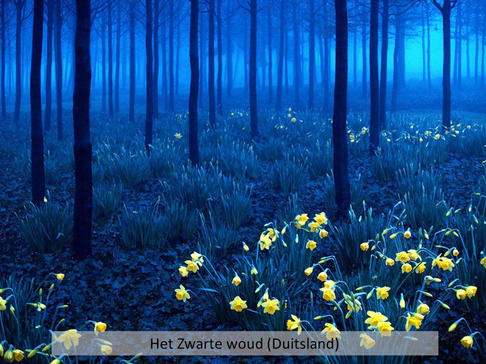 Het Zwarte woud (Duitsland)