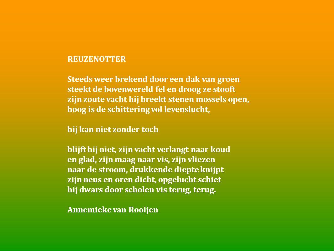 REUZENOTTER Steeds weer brekend door een dak van groen steekt de bovenwereld fel en droog ze stooft zijn zoute vacht hij breekt stenen mossels open, h