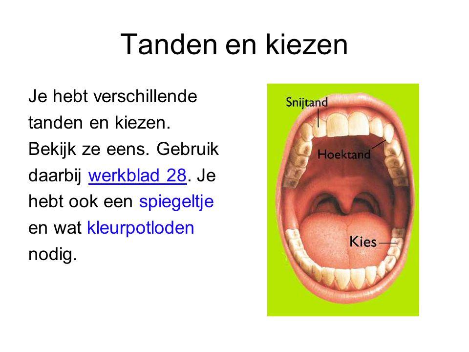 Tanden en kiezen Je hebt verschillende tanden en kiezen. Bekijk ze eens. Gebruik daarbij werkblad 28. Je hebt ook een spiegeltje en wat kleurpotloden