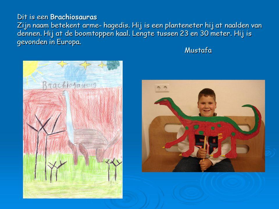 Dit is een Brachiosauras Zijn naam betekent arme- hagedis. Hij is een planteneter hij at naalden van dennen. Hij at de boomtoppen kaal. Lengte tussen