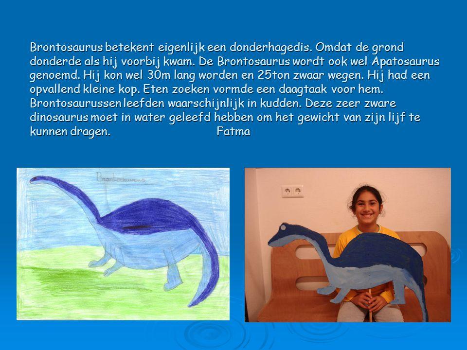 Brontosaurus betekent eigenlijk een donderhagedis. Omdat de grond donderde als hij voorbij kwam. De Brontosaurus wordt ook wel Apatosaurus genoemd. Hi