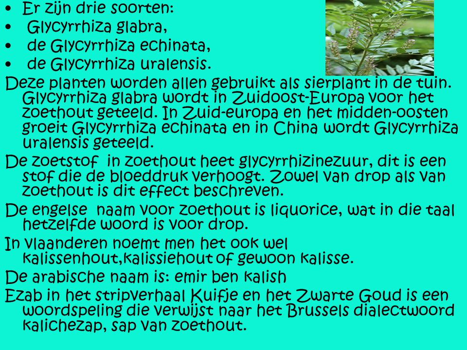 Er zijn drie soorten: Glycyrrhiza glabra, de Glycyrrhiza echinata, de Glycyrrhiza uralensis. Deze planten worden allen gebruikt als sierplant in de tu