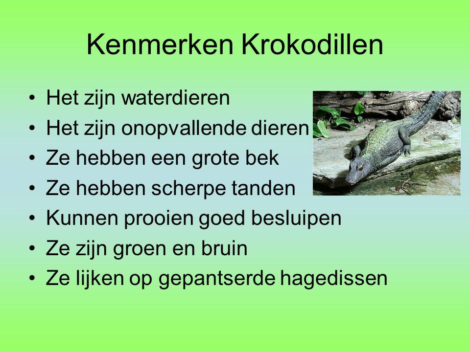 Kenmerken Krokodillen Het zijn waterdieren Het zijn onopvallende dieren Ze hebben een grote bek Ze hebben scherpe tanden Kunnen prooien goed besluipen Ze zijn groen en bruin Ze lijken op gepantserde hagedissen