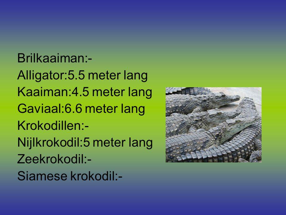 Brilkaaiman:- Alligator:5.5 meter lang Kaaiman:4.5 meter lang Gaviaal:6.6 meter lang Krokodillen:- Nijlkrokodil:5 meter lang Zeekrokodil:- Siamese krokodil:-