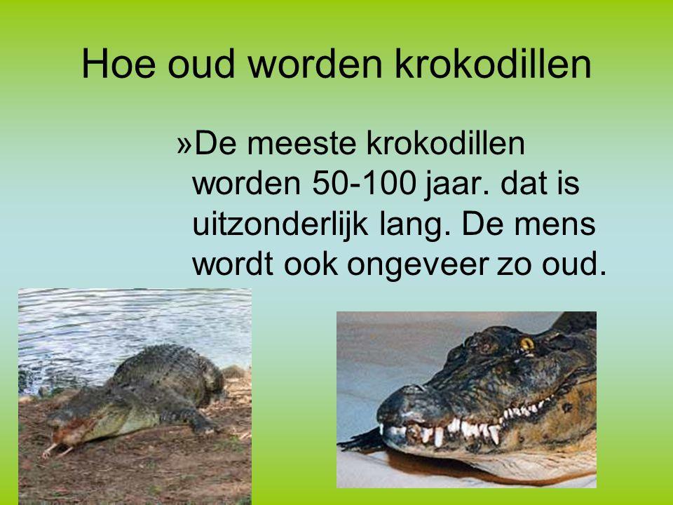 Hoe oud worden krokodillen »De meeste krokodillen worden 50-100 jaar.