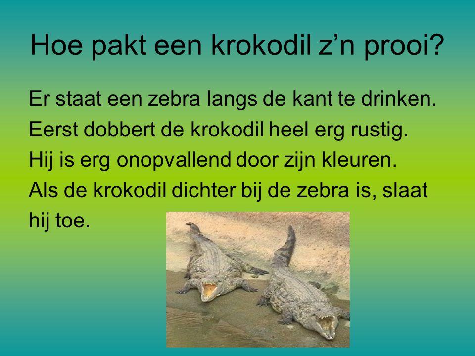 Hoe pakt een krokodil z'n prooi.Er staat een zebra langs de kant te drinken.
