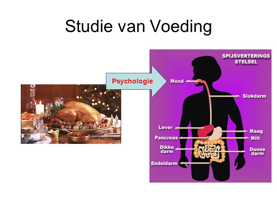 Studie van Voeding Psychologie