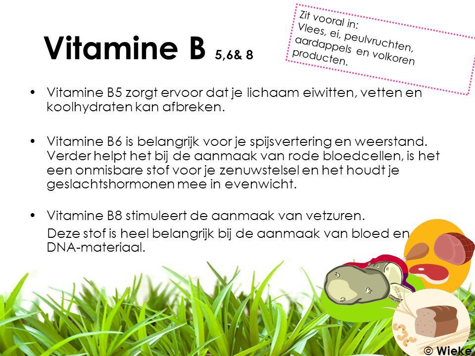 Vitamine B5 zorgt ervoor dat je lichaam eiwitten, vetten en koolhydraten kan afbreken. Vitamine B6 is belangrijk voor je spijsvertering en weerstand.