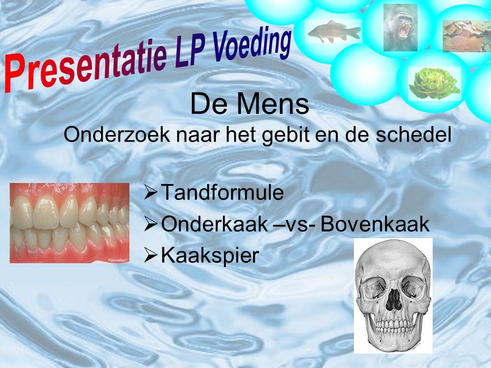  Tandformule  Onderkaak –vs- Bovenkaak  Kaakspier De Mens Onderzoek naar het gebit en de schedel