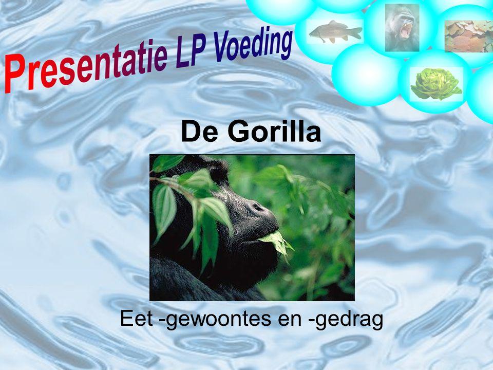 De Gorilla Eet -gewoontes en -gedrag
