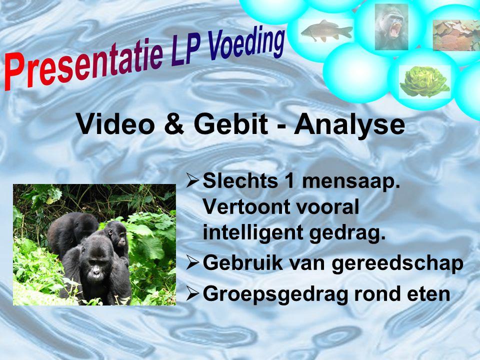 Video & Gebit - Analyse  Slechts 1 mensaap.Vertoont vooral intelligent gedrag.