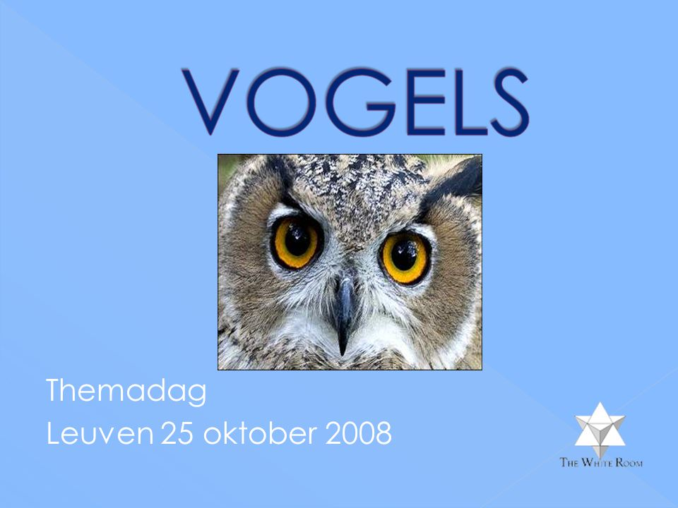 Themadag Leuven 25 oktober 2008